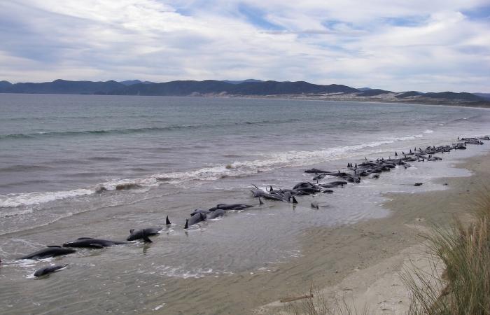 Baleias Zelândia 700 450