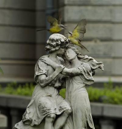 O casal de suiriri aproveita o clima romântico da praça da Liberdade para namorar. O livro Pássaros da Liberdade custa R$ 80. Além das 230 fotos de pássaro...