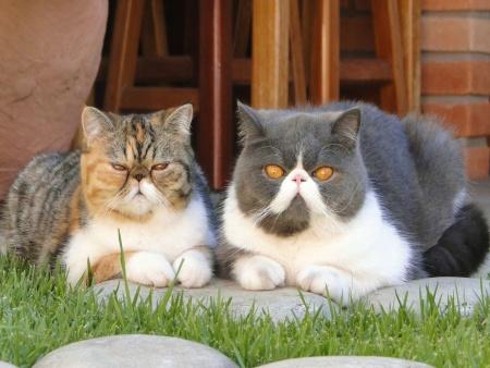 Exposição de Gatos Exóticos na Barra Funda