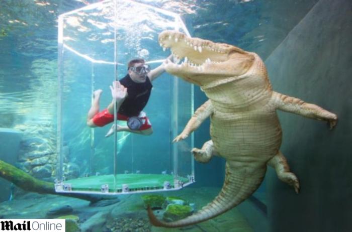 http://i2.r7.com/crocodilo-gigante.jpg