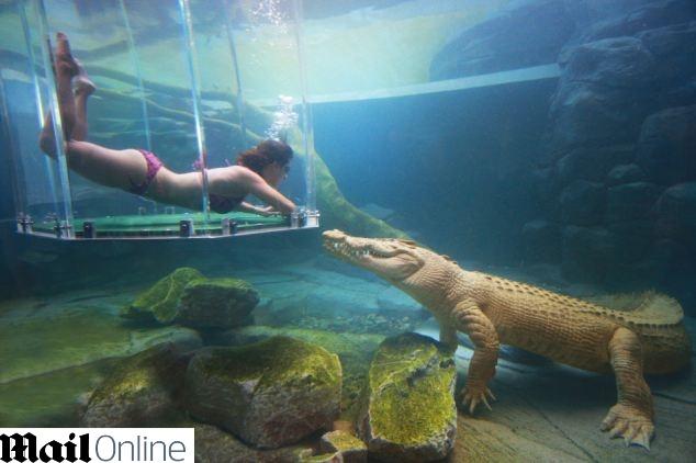 crocodilo2