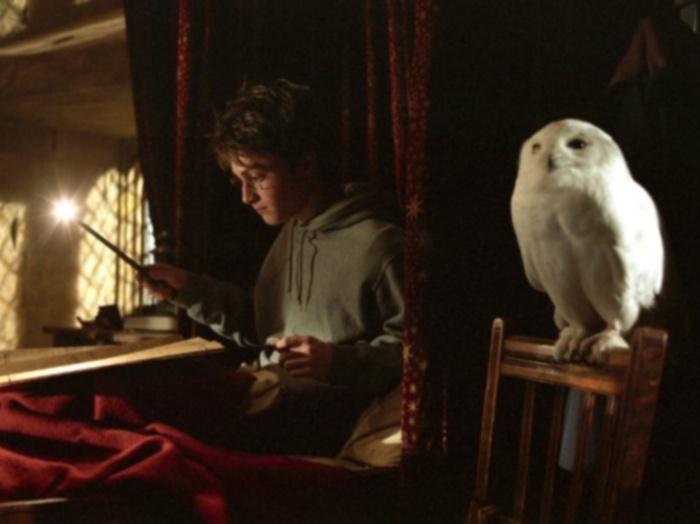 Harry coruja