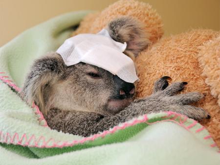 Reprodução/ Australia Zoo