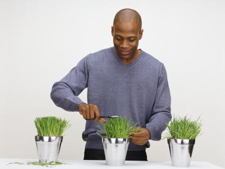Faça sua horta em casa e tenha à mãotemperos e ervas para chá ...