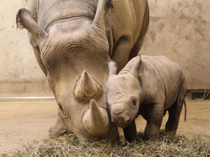 Salvemos animales en peligro de extinción