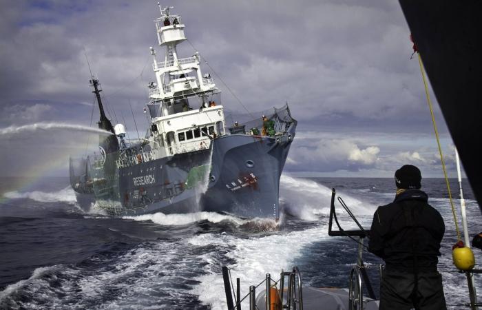 Caça baleias 700 450