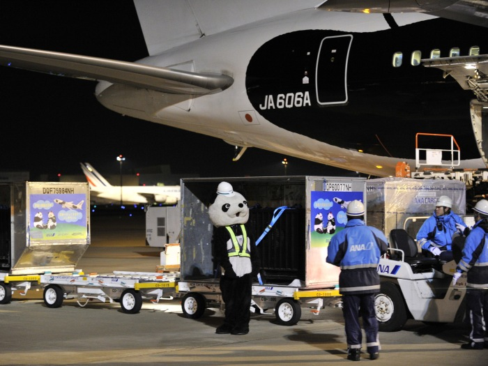Panda aeroporto Japão