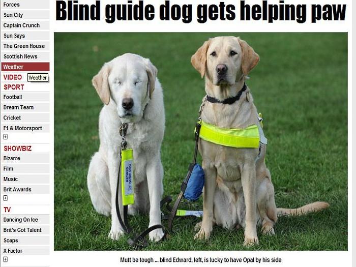 cachorro e cão guia