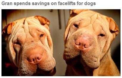 cachorros shar pei com plástica