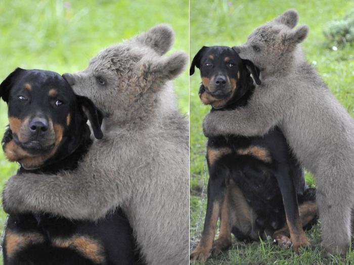 Urso medo e cão
