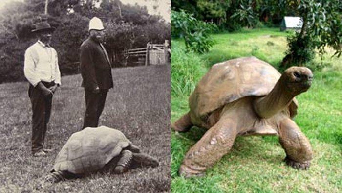 jonathan-tartaruga-hg