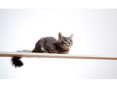 gato=2011