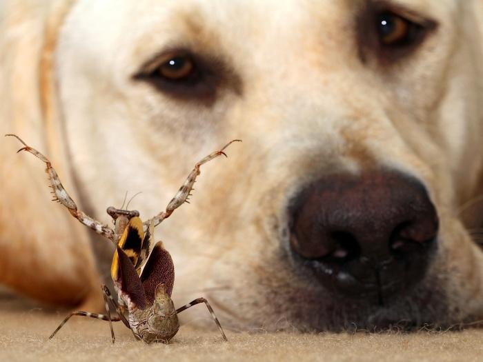 O inseto bem que tentou, mas não conseguiu capturar a atenção do labrador Winston com sua dança dramática. O fotógrafo Scott Cromwell registrou a cena inus...