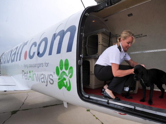 avião-cães-hg-20110925