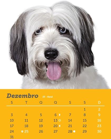 Os olhosazuisde Suri parecemdeboneca. Lindos de doer. A cachorrinha, que poderia bem ser umamodelo internacional,representa uma autêntica vira-lata, ...