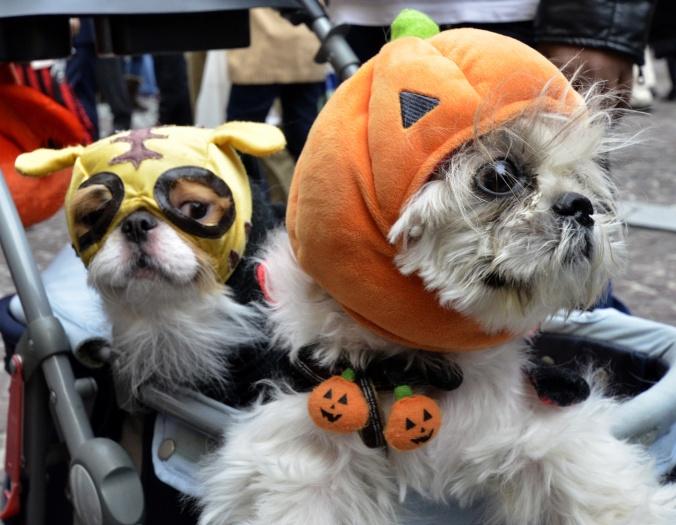 halloween-caes