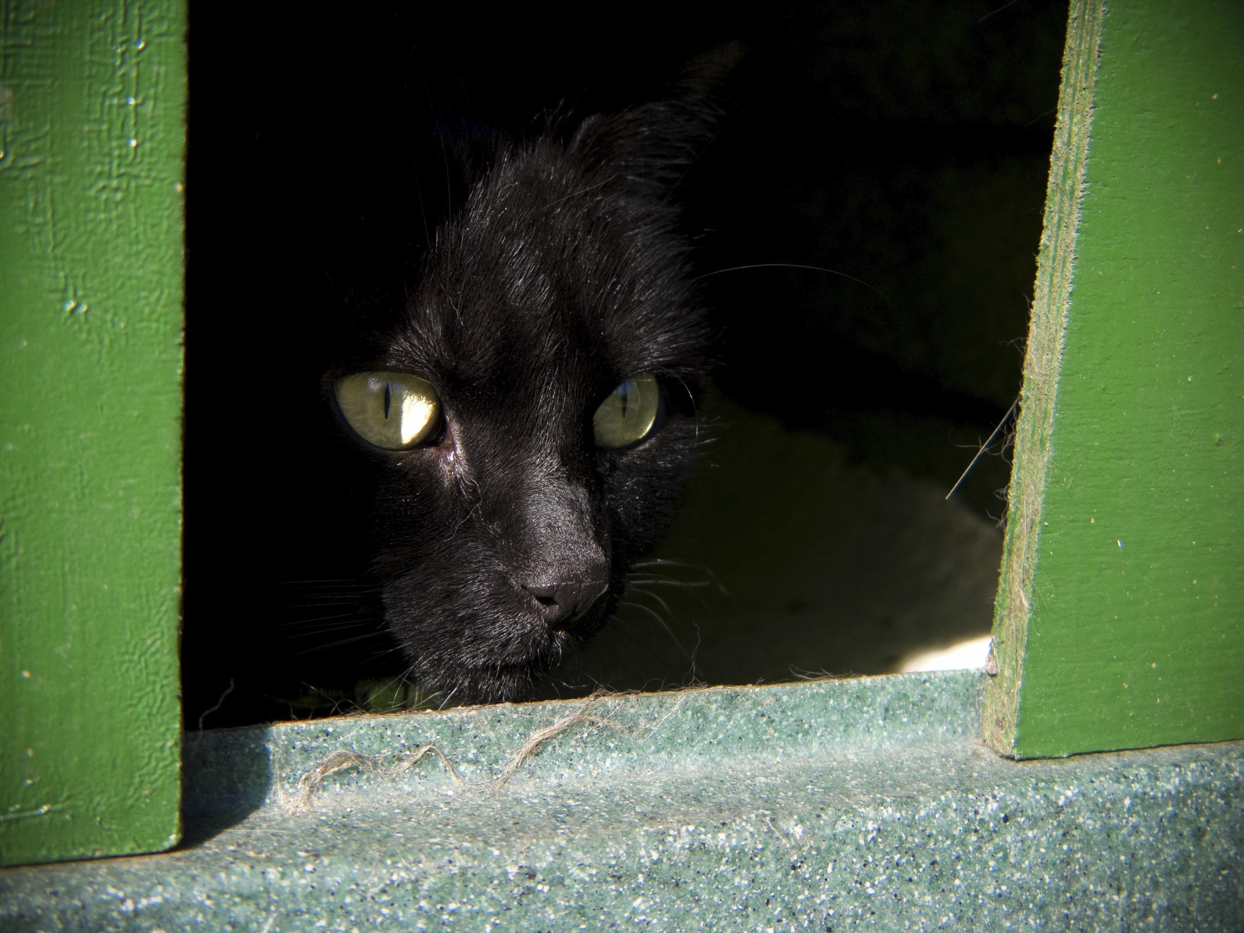 Mal silencioso e sem cura, aids de gato pode matar - Bichos - R7