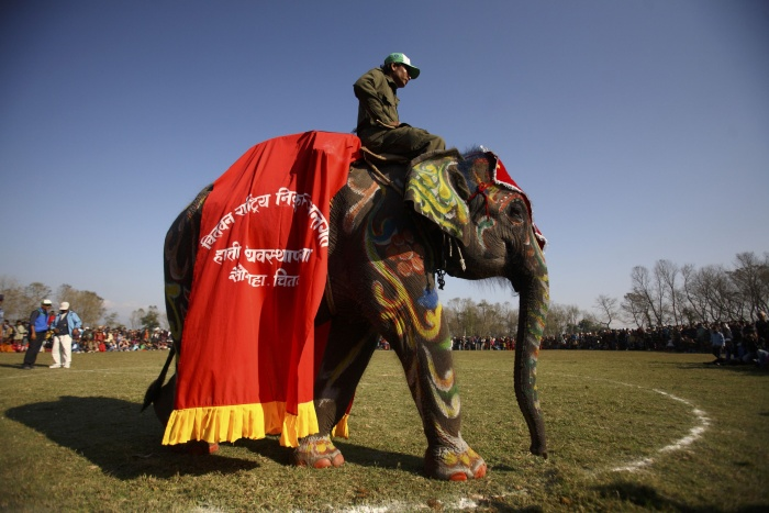 Elefantes participam de concurso de beleza Phant