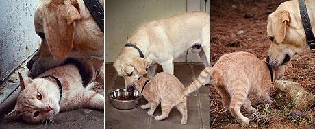 Fiel, cachorro se torna o 'melhor amigo do gato'