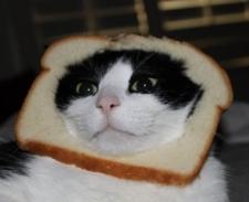 Peludos e nutritivos: sanduíche de gatos vira sensação na internet