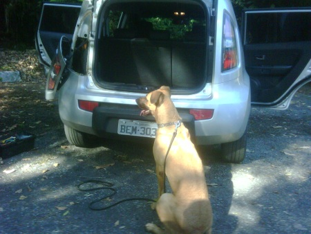cachorro pf