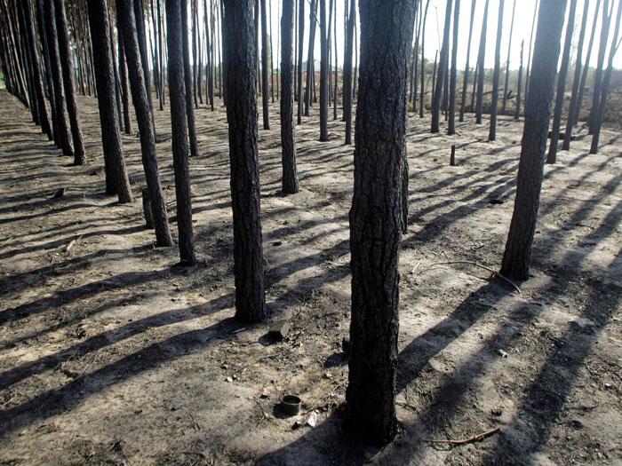 floresta russia