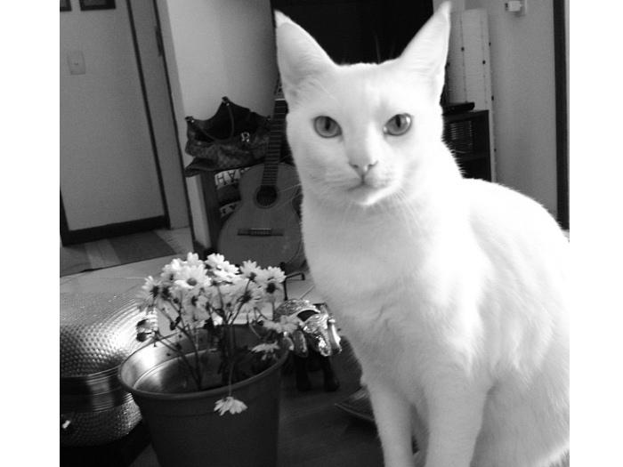 gato-mel-2012