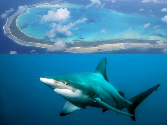 tubarão, kiribat, micronésia, 700