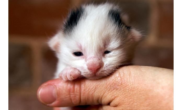 Encontrou um filhote de gato abandonado? Saiba como cuidar de ...