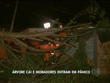 Um eucalipto de 15 metros caiu sobre uma casa