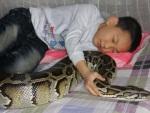 Cobra gigante é usada como babá de garotinho chinês