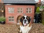 Cachorro ganha mansão de R$ 5,8 mil que imita a casa do dono