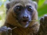 Conheça animais extremamente raros de encontrar na natureza
