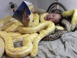 Dono de zoológico dorme com várias cobras em sua cama