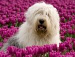 Casal holandês fotografa cães em situações do dia a dia