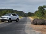 Na África do Sul, animais selvagens chegam pertinho das pessoas