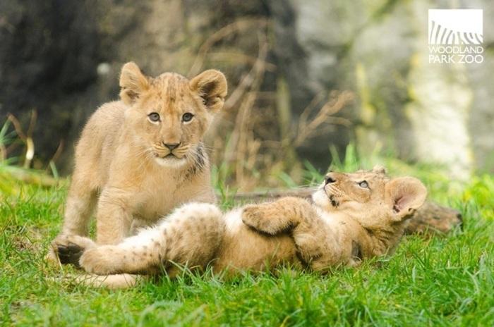 Divulgação/Woodland Park Zoo