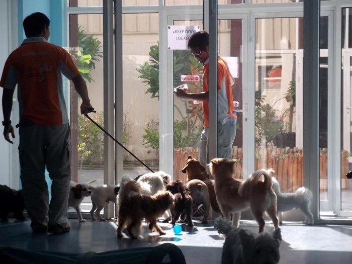 O resort ainda oferece uma academia e serviço de dogwalker para que os bichinhos se exercitem
