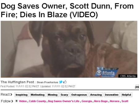 Cão herói