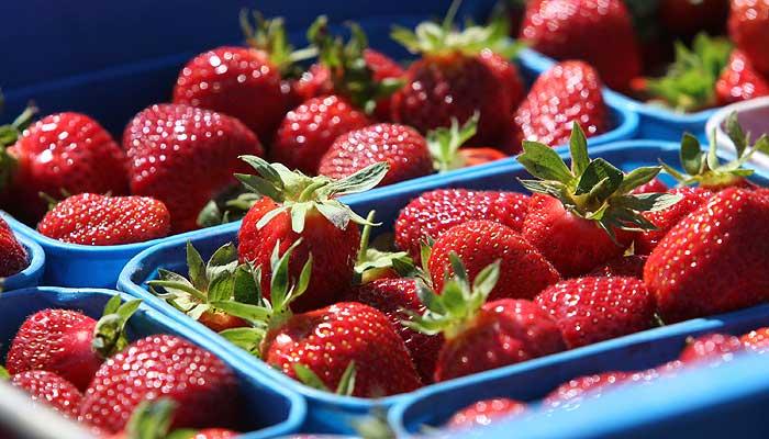 Consumo exagerado de alimentos com agrotóxico pode causar ...