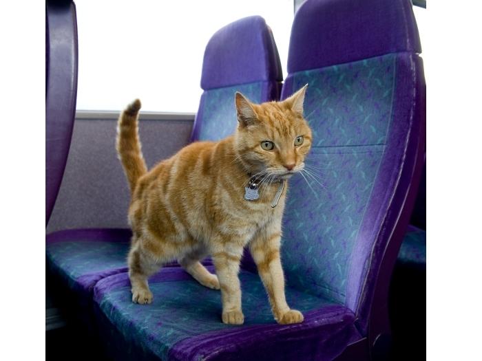 Gato no ônibus