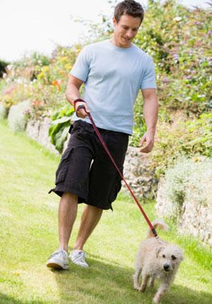 cachorro caminhada 300x430