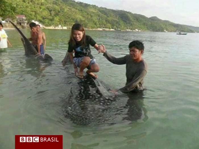 filipinas, tubarão, 700