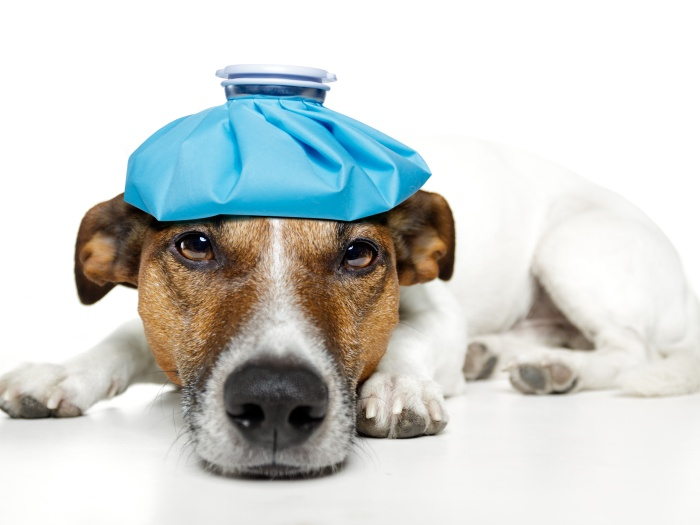 Nada de dar remédios ao pet sem consultar um veterinário