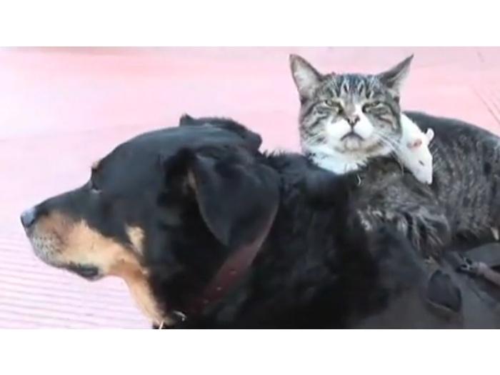 Cachorro, gato, rato
