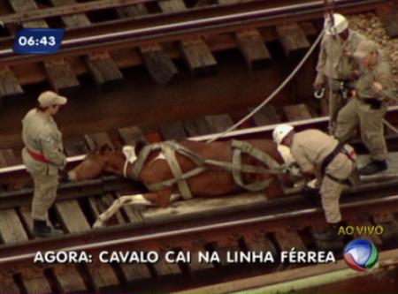 cavalo450