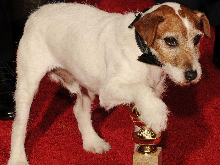 Uggie, do filme O Artista, no tapete vermelho do Globo de Ouro 2012