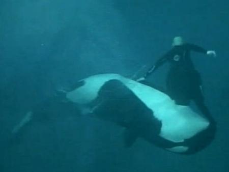 Orca arrasta