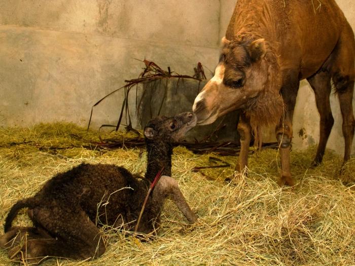 Carlos Nader/Zoo de SP