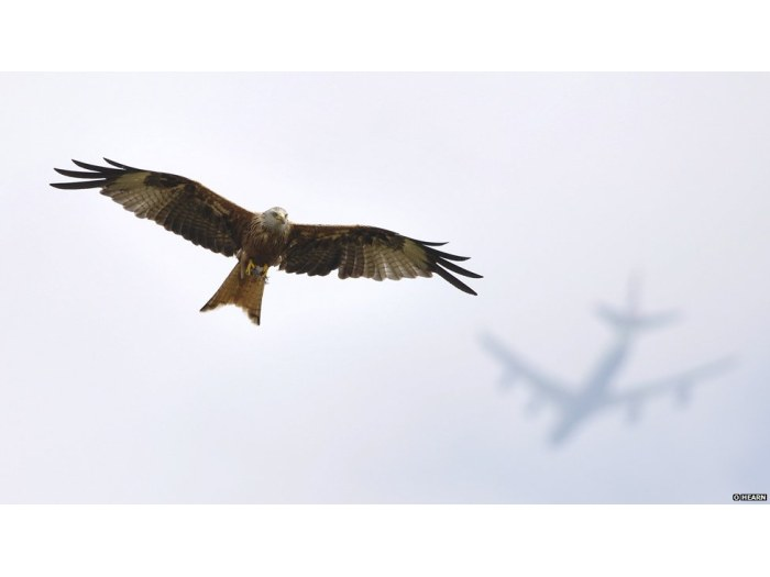 O. Hearn/Veolia Environment Wildlife Photographer of the Year